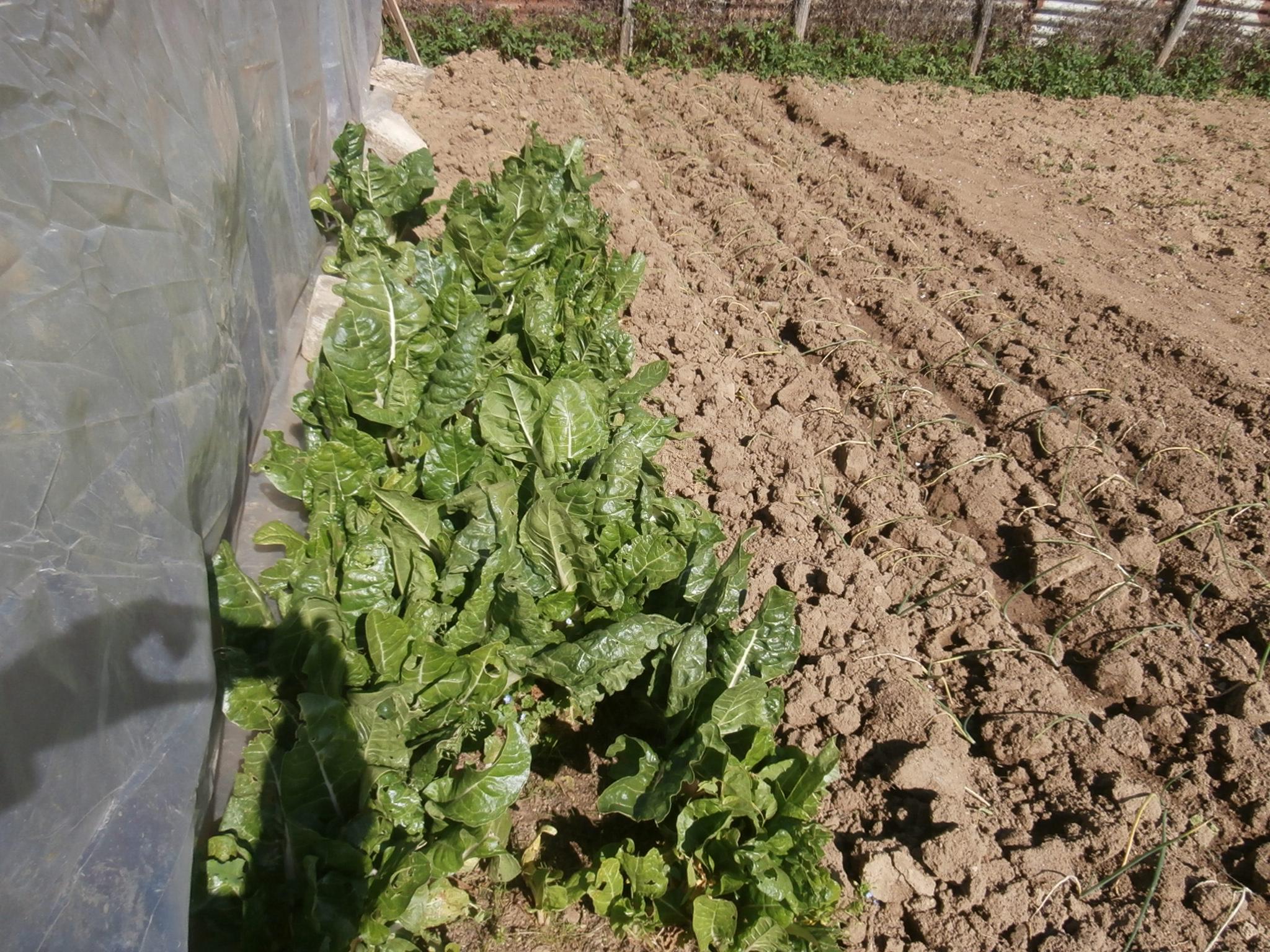 Orto con annesso agricolo